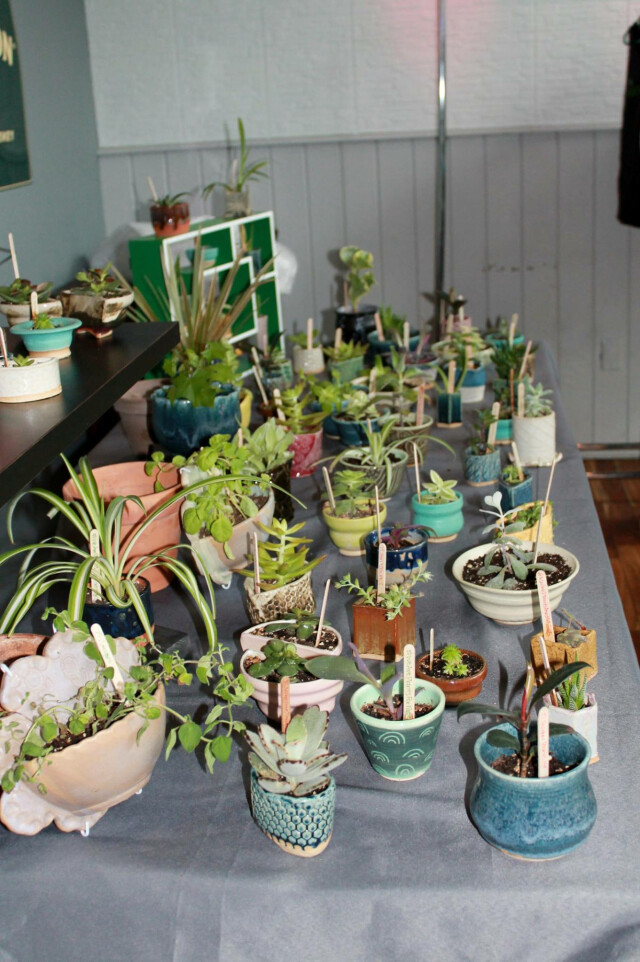 Plants gathered up at the fifth year celebration ceremony